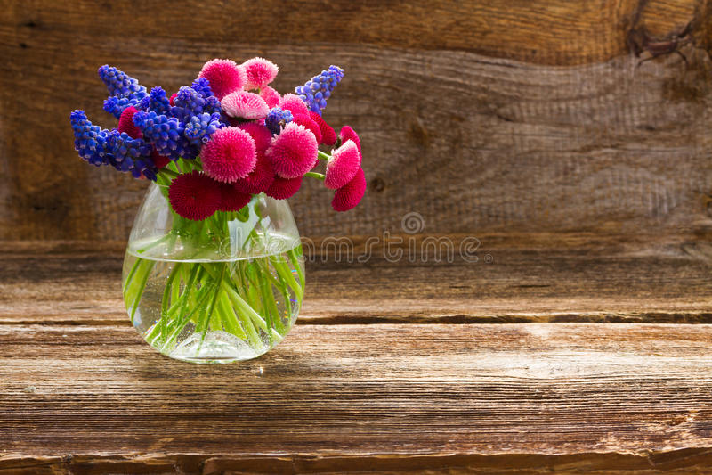 Muscari e Daisy Flowers fotos de stock