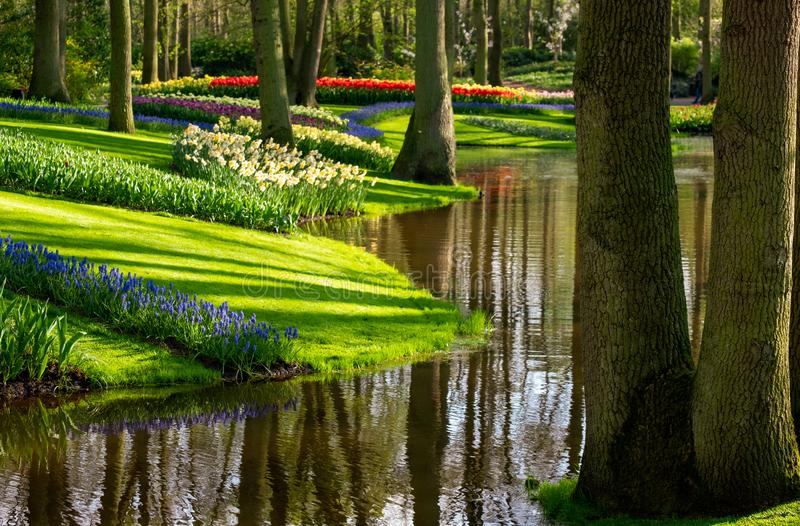 Muscari hyacinths and tulips by the lake at Keukenhof Gardens, Lisse, South Holland. Photographed in HDR high dynamic range. stock photo