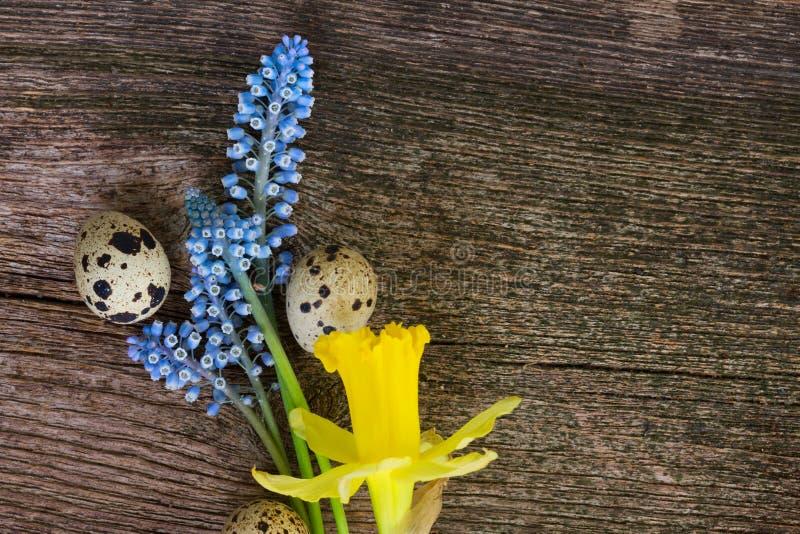 Muscari, Narzissen und Eier lizenzfreies stockfoto