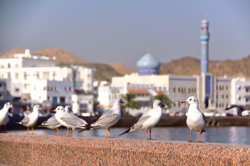 MUSCAT OMAN: Seagulls på Muttrah corniche med Sur Al Lewatia Mosque i bakgrunden arkivfoto