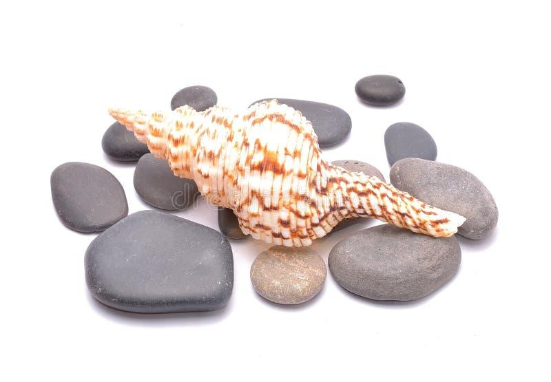 Muschel über Gruppe Steinen auf weißem Hintergrund stockfotografie