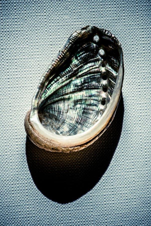 Muschel über Segeltuch stockfotografie