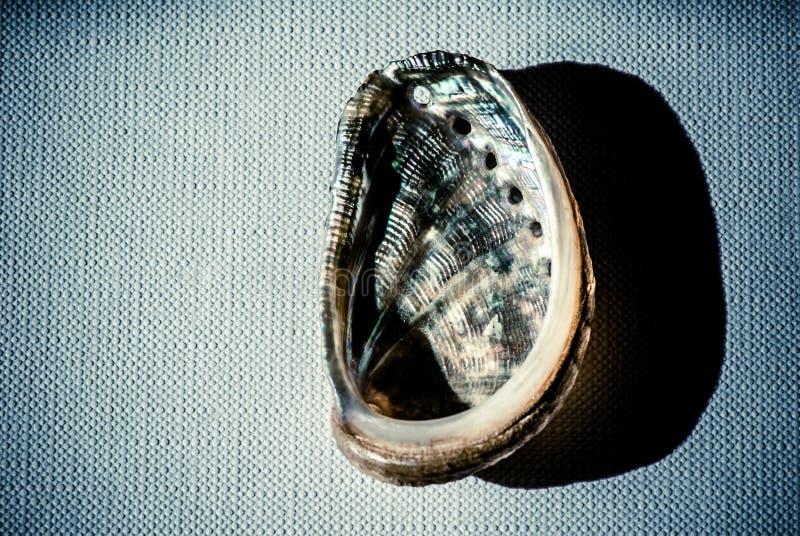 Muschel über Segeltuch lizenzfreie stockbilder