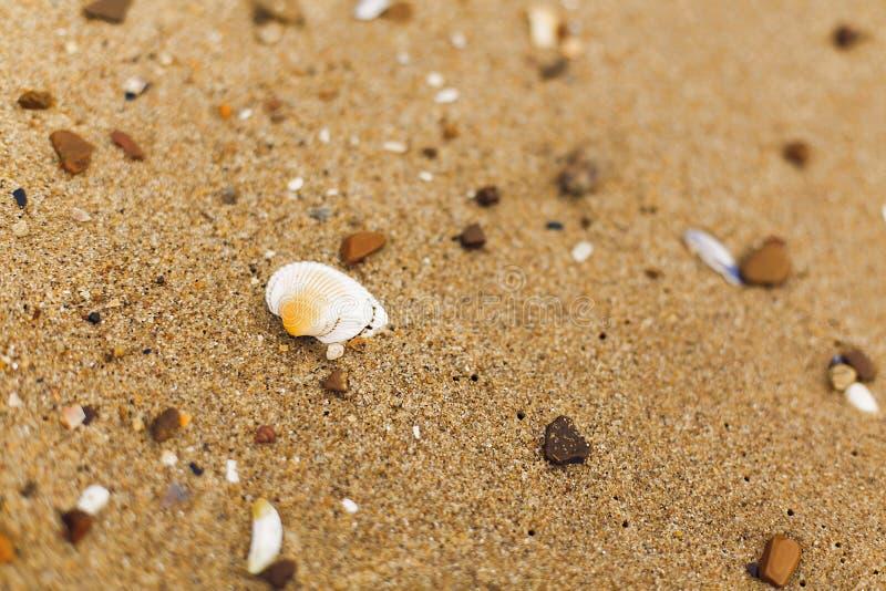 Muschel auf Abschluss des sandigen Strandes oben Weiße Oberteile auf Ufer nahe Meer Entspannung auf Tropeninsel Lassen Sie ` s ge stockfotos