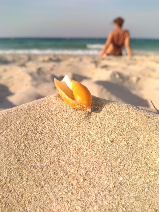 Muschel auf dem sandigen Ufer lizenzfreie stockfotos