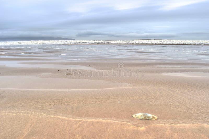 Muschel auf dem Seeufer stockbilder