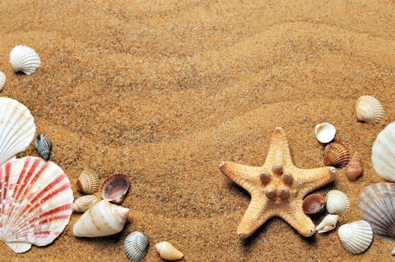 Muschel, Konchologie, Sand, Material lizenzfreie stockbilder