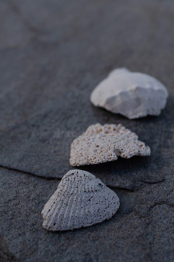 Muschel und Fragmente auf Gray Stone stockbild