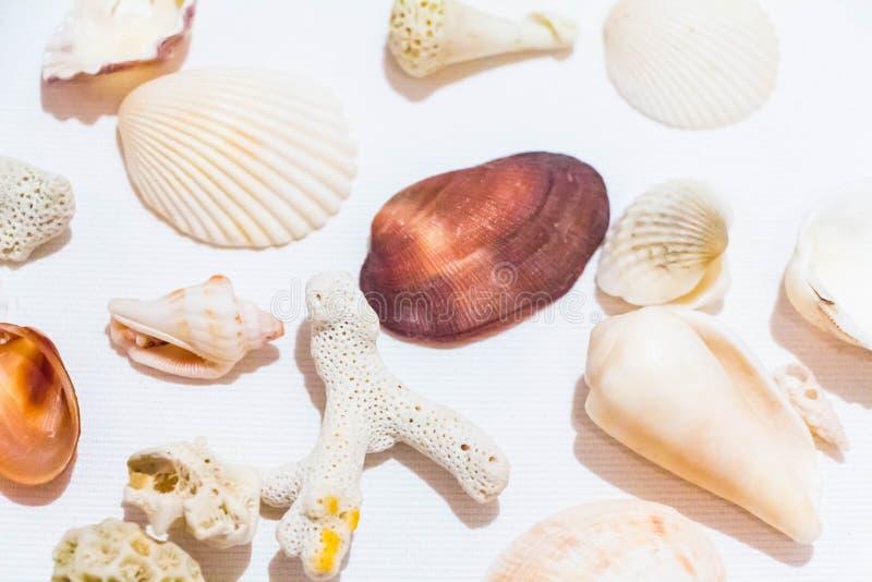 Muschel und korallenrote Sammlung auf wei?em Hintergrund stockfotos