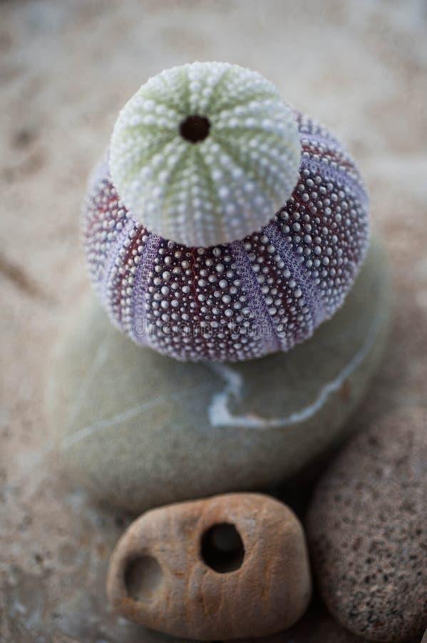 Muschel-Zen stockbild
