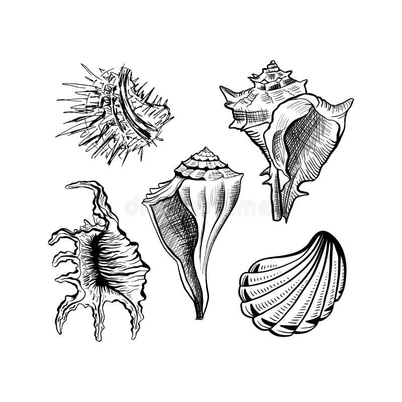 Muscheln übergeben gezogenen Tintenstiftskizzen-Vektorsatz stock abbildung