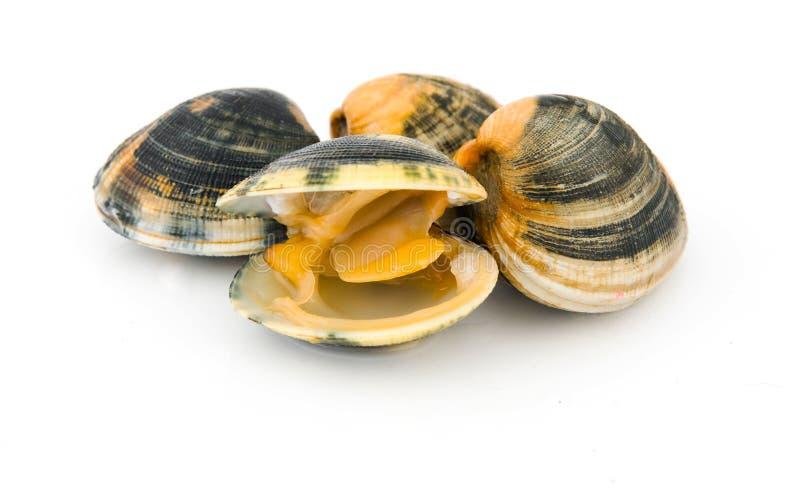 Muscheln stockfoto