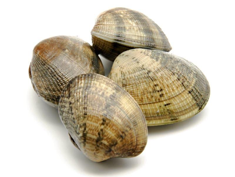 Muscheln stockbild