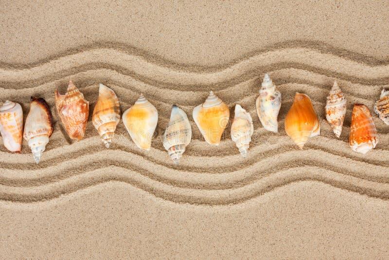 Muscheln auf dem Sand stockbilder