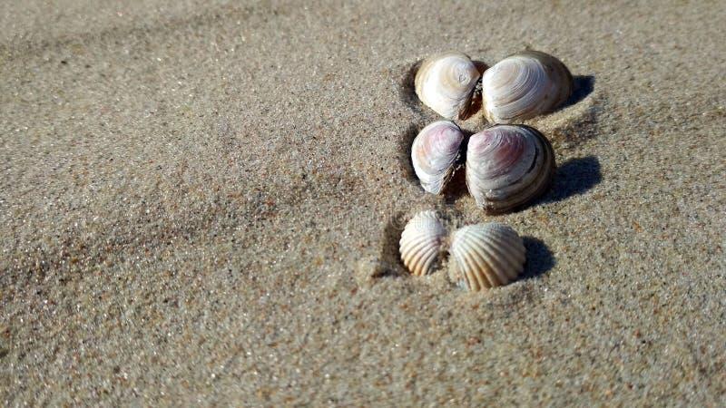 Muscheln auf der sonnigen Küste lizenzfreie stockfotos