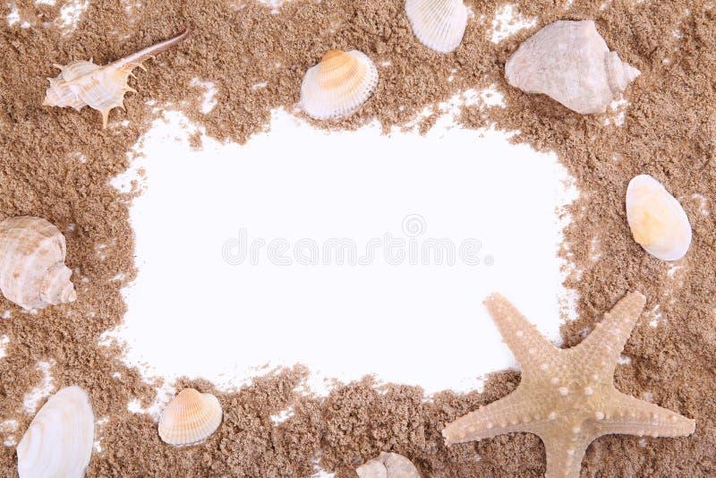 Muscheln auf einem Sandhaufen lokalisiert über weißem, Rahmen stockbild