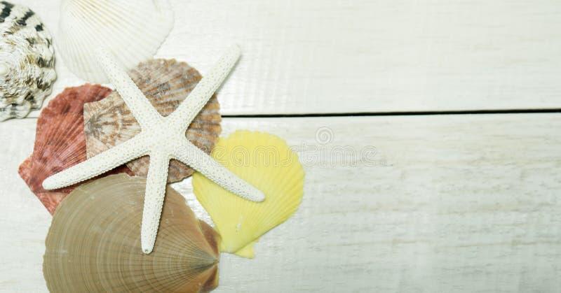 Muscheln auf hölzernem Hintergrund des Rahmens stockbild