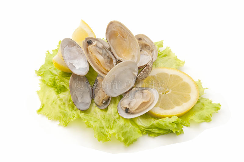 Muscheln auf Kopfsalatblättern stockbild