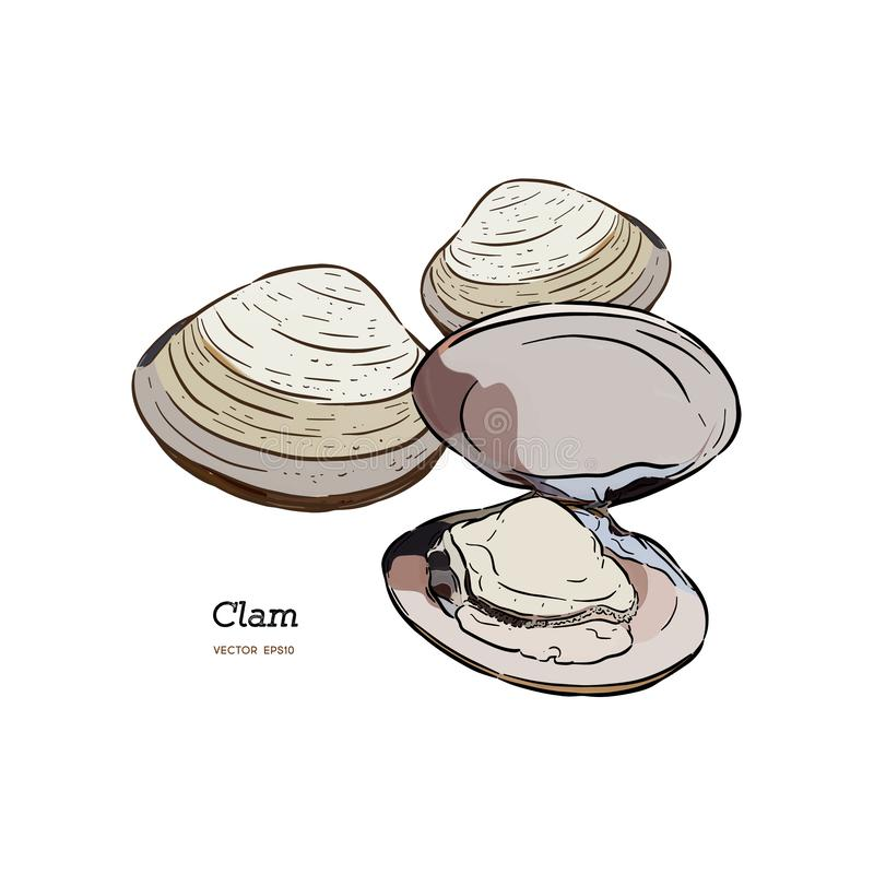 Muscheln, Miesmuscheln, Meeresfrüchte, Skizzenartvektor lizenzfreie abbildung