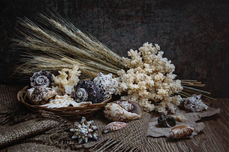 Muscheln mit Korallen stockfotografie