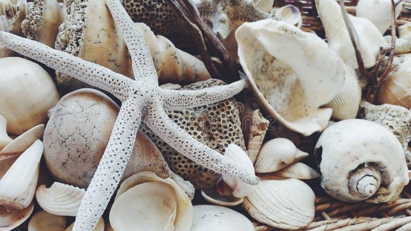 Muscheln und Starfish stockfotos