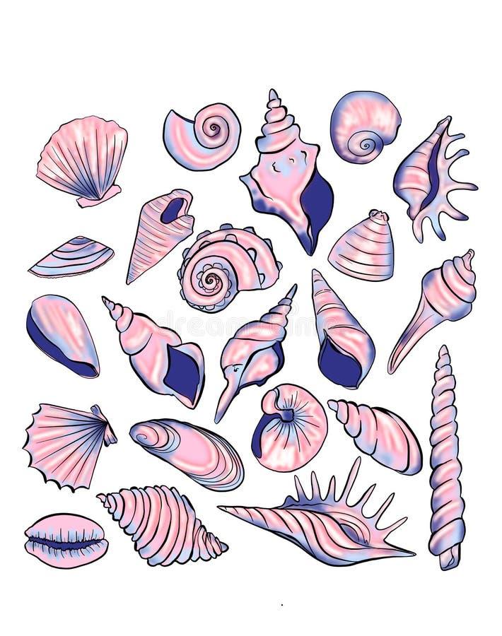 Muscheln von verschiedenen Formen auf einem weißen Hintergrund lizenzfreie abbildung