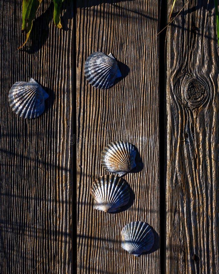 Muschelschalen auf verwittertem Holz stockfotos