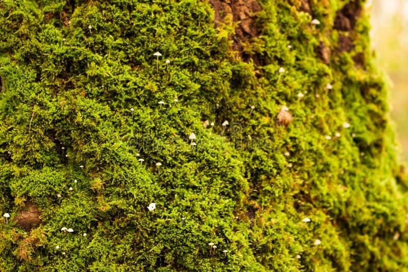 Muschi, licheni e funghi 3 immagini stock libere da diritti