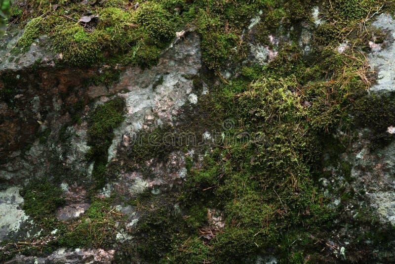 Muschio bagnato sulla superficie della roccia fotografie stock libere da diritti