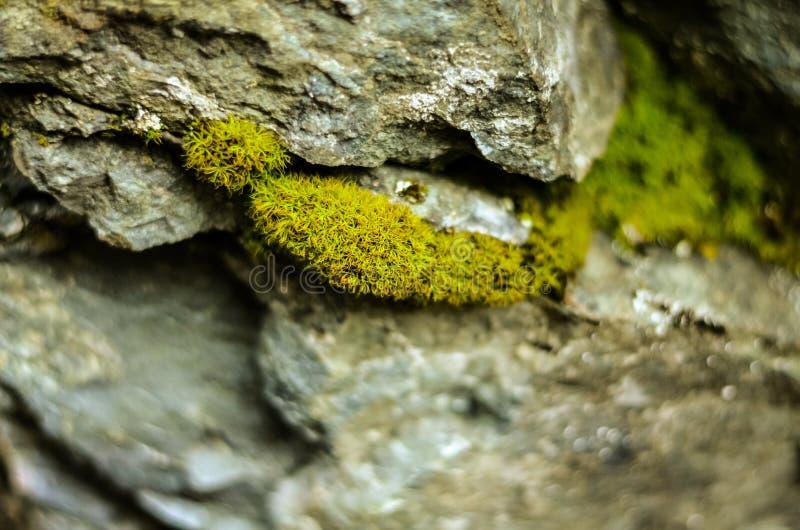 Muschio che cresce fra le rocce fotografie stock