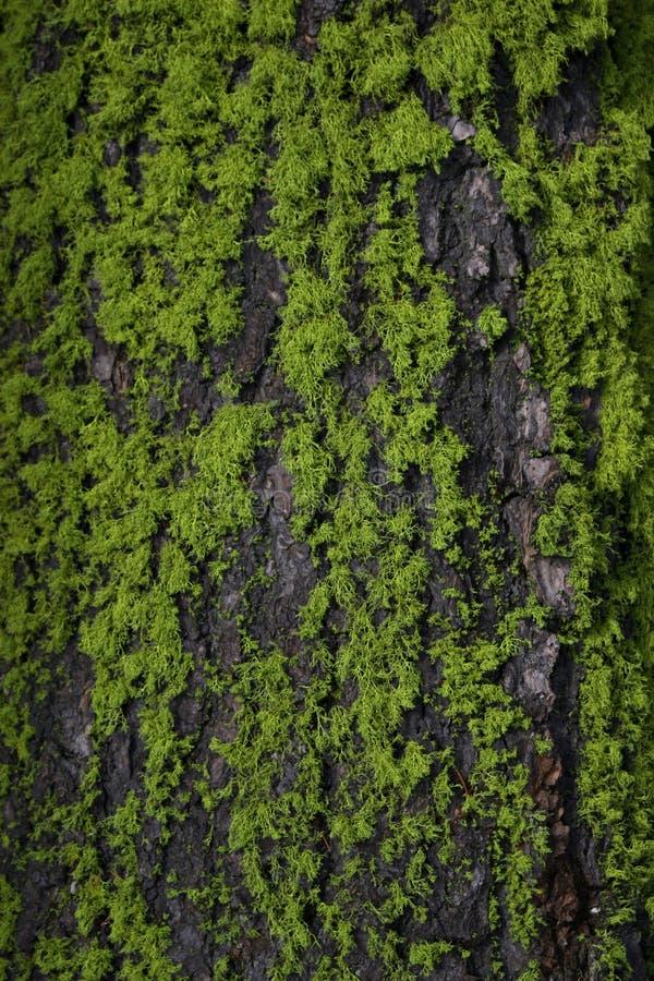 Muschio e corteccia dell'albero fotografia stock