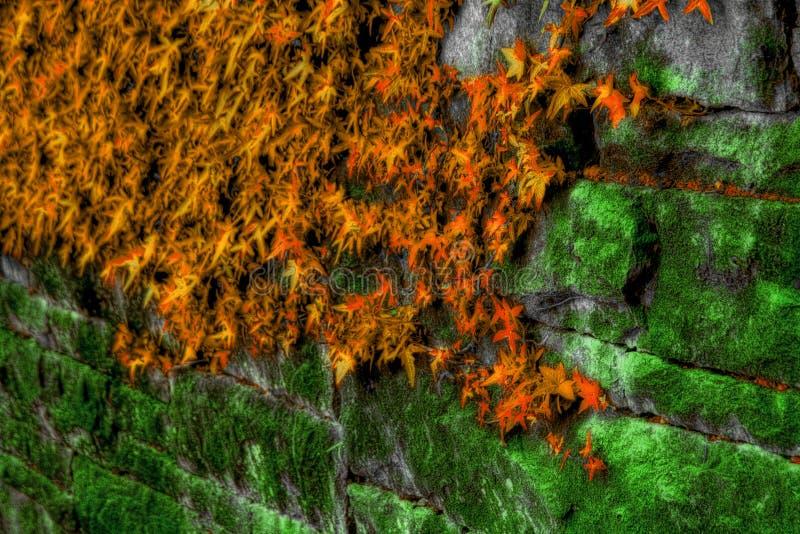 Muschio ed edera sulla parete di pietra fotografia stock libera da diritti