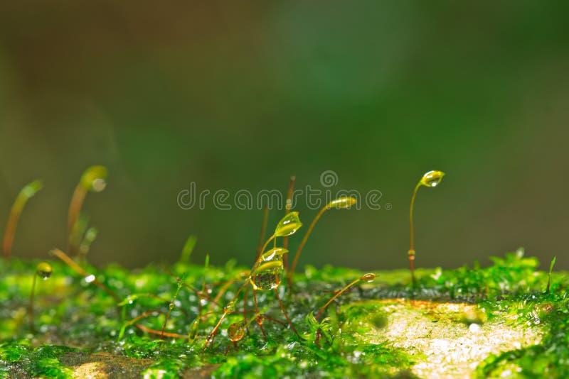 Muschio fresco fotografie stock