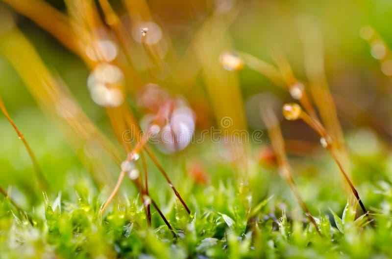 Muschio fresco in natura verde fotografia stock