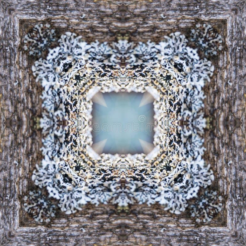Muschio grigio elegante molto fine sul bordo di vecchio recinto di legno, primo piano royalty illustrazione gratis