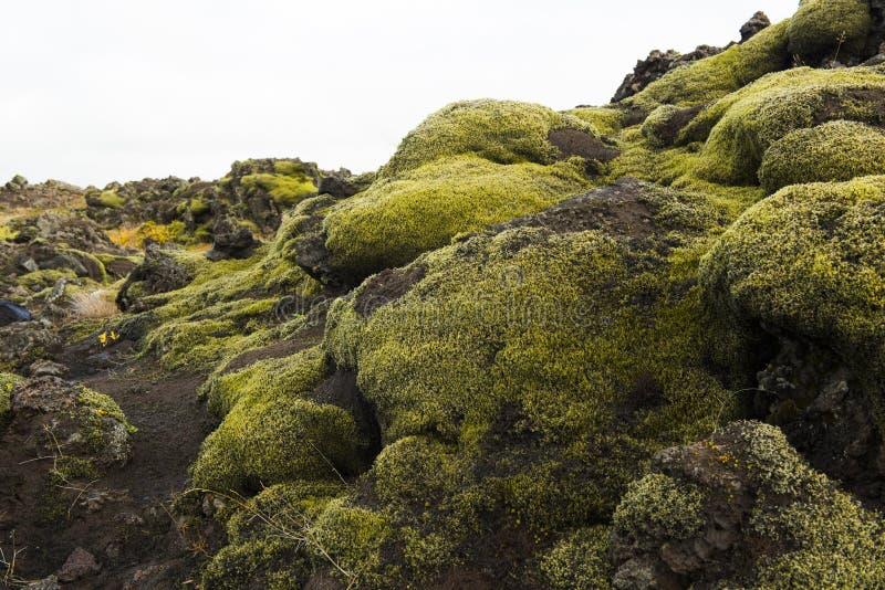 Muschio islandese e rocce vulcaniche/Islanda immagine stock libera da diritti