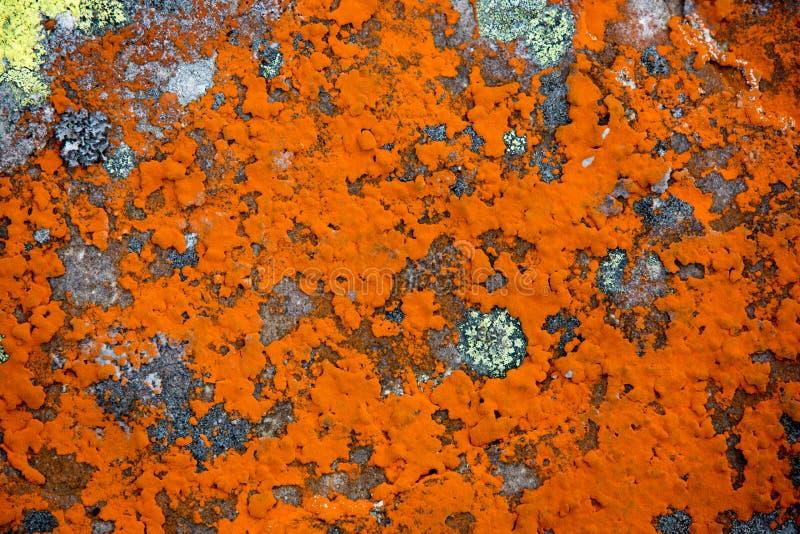 Muschio rosso su fondo di pietra fotografie stock