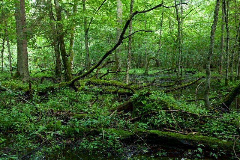Muschio rotto morto degli alberi avvolto con l'ortica immagine stock libera da diritti