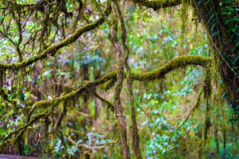 Muschio sull'albero in Ang Ka Luang Nature Trail immagine stock libera da diritti