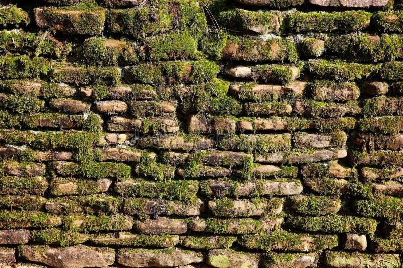 Muschio sulla parete di pietra immagini stock libere da diritti