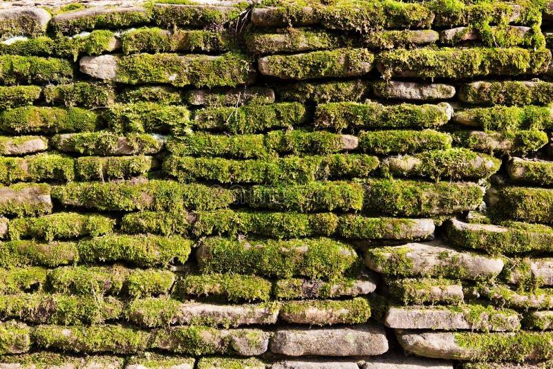Muschio sulla parete di pietra fotografie stock libere da diritti
