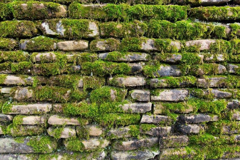 Muschio sulla parete di pietra fotografia stock libera da diritti