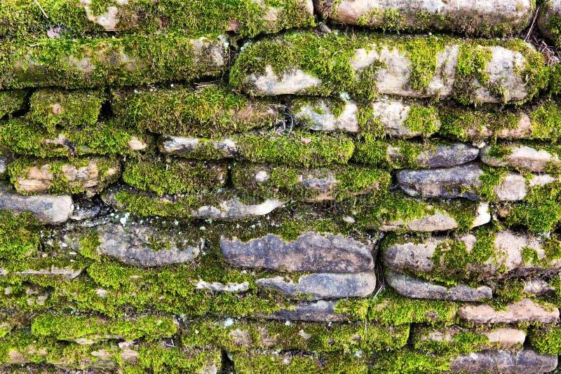 Muschio sulla parete di pietra fotografie stock