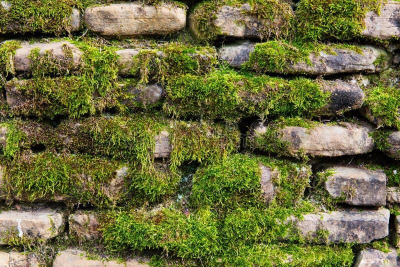 Muschio sulla parete di pietra immagine stock