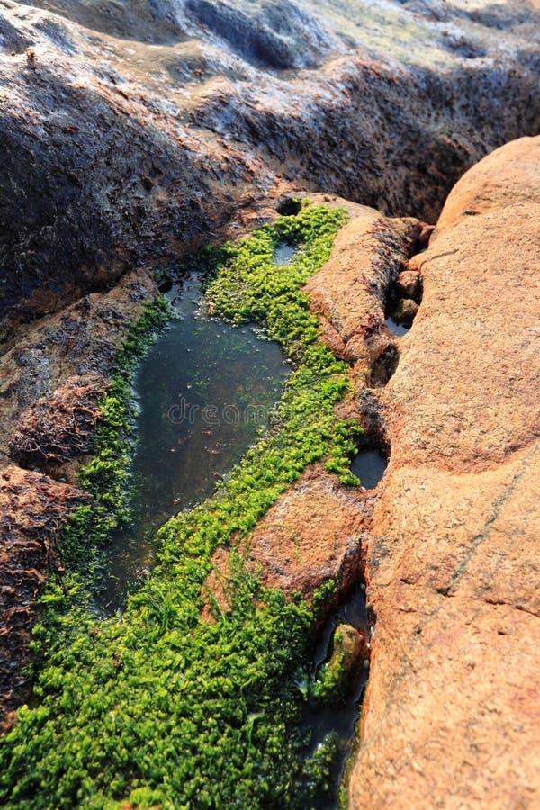 Muschio sulla roccia immagine stock