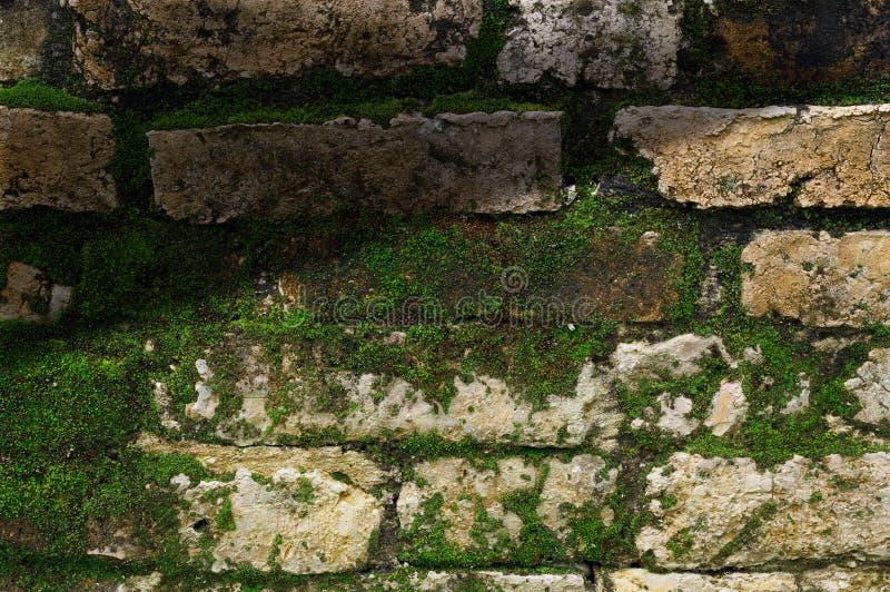 Muschio sulla vecchia parete di pietra fotografie stock libere da diritti