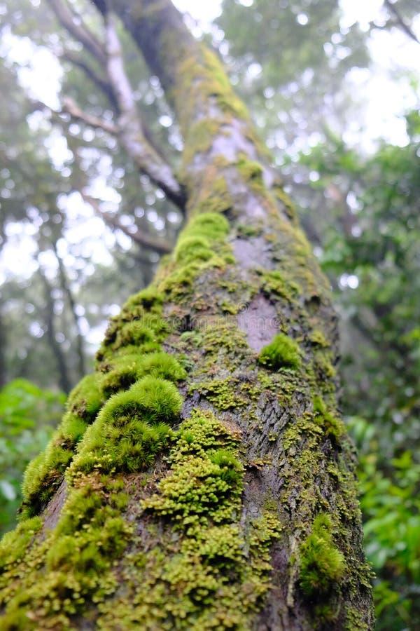 Muschio sulla vista del tronco di albero da sotto fotografia stock