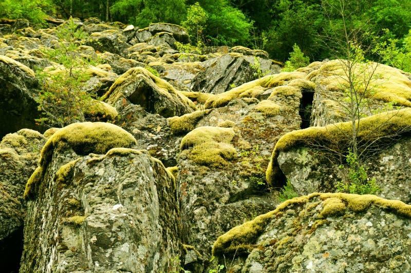 Muschio sulle rocce fotografie stock libere da diritti