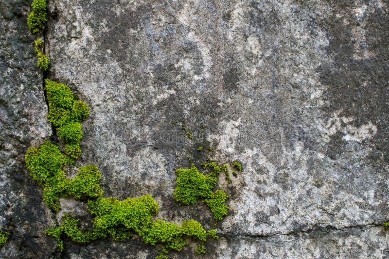 Muschio sulle rocce naughty immagini stock libere da diritti
