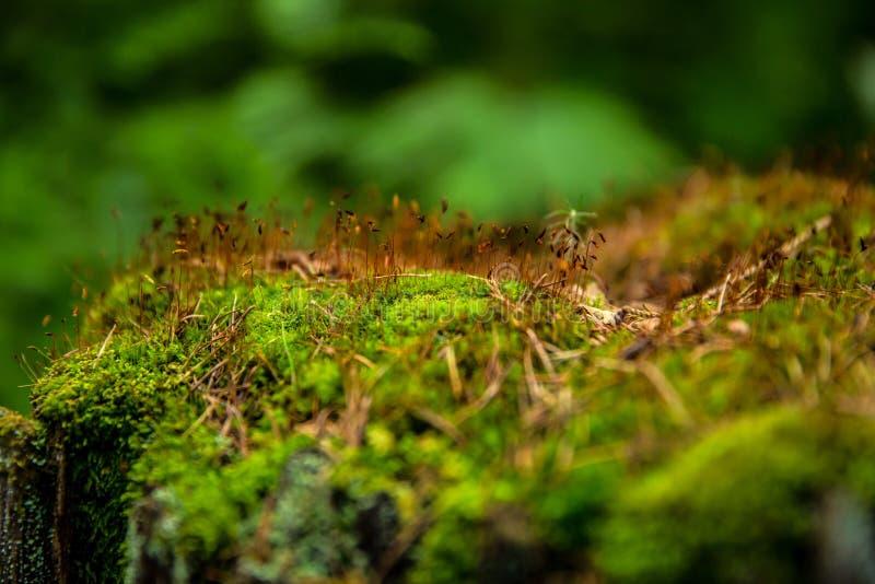 Muschio verde ed erba gialla su un albero nella foresta fotografia stock